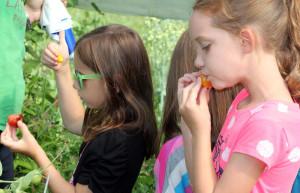 Two third-graders enjoy fresh tomatoes.